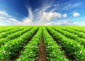L'investissement dans la terre agricole: est-ce rentable?