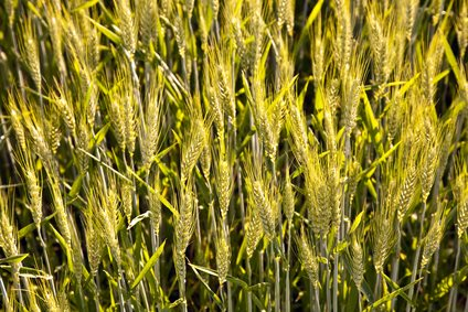 secteur porteur de l'agroalimentation